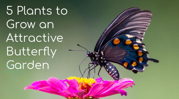 5 Flowering Plants to Grow an Attractive Butterfly Garden