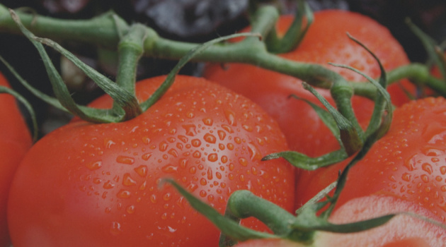 5 Care Tips to Grow Tomatoes (juicy and lush ones!)