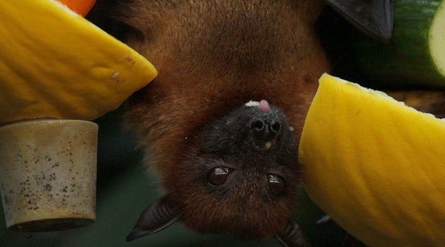5 Surprising Reasons to Attract Bats to Your Yard (and How!)