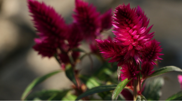 5 Annuals That Just Love the Sun!