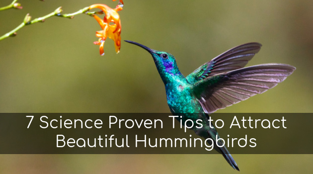 7 Science Proven Tips to Attract Beautiful Hummingbirds to the Garden