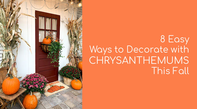 8 Easy Ways to Decorate with Chrysanthemums This Fall