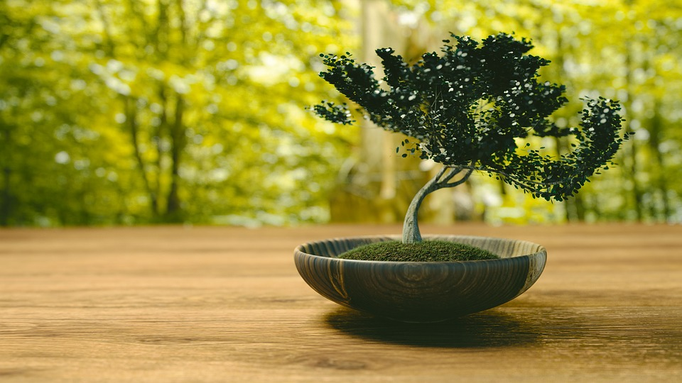 How To Grow Bonsai Trees For Beginners|Guest Post by Kaizen Bonsai