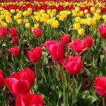 Easter Flowers Pexels