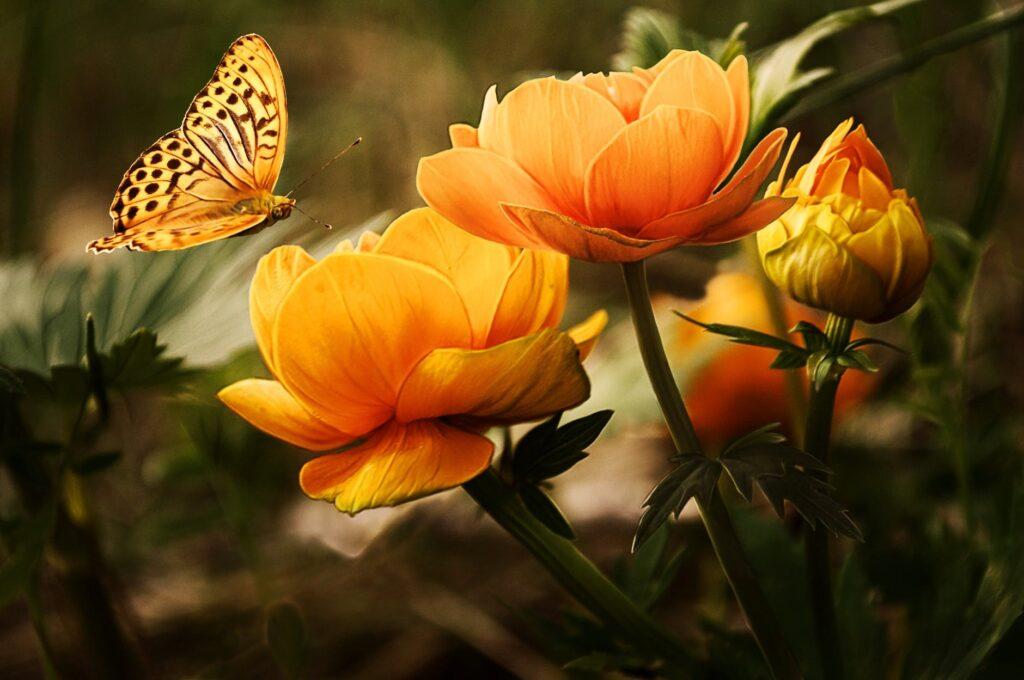 Birds, Bees, Butterflies