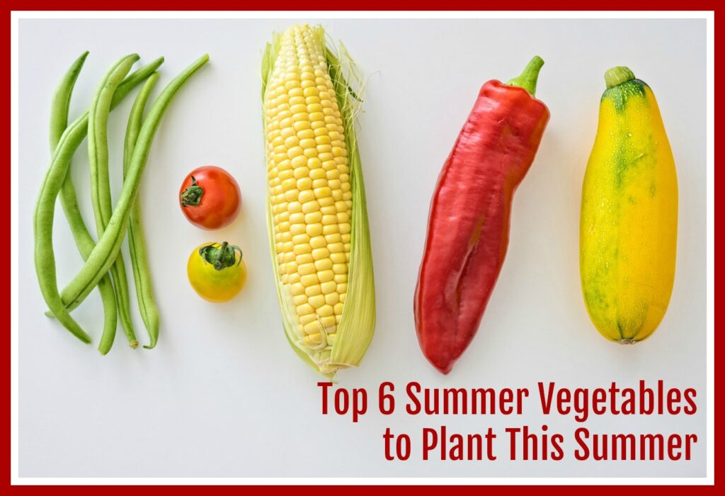 Top 6 Vegetables to Plant This Summer