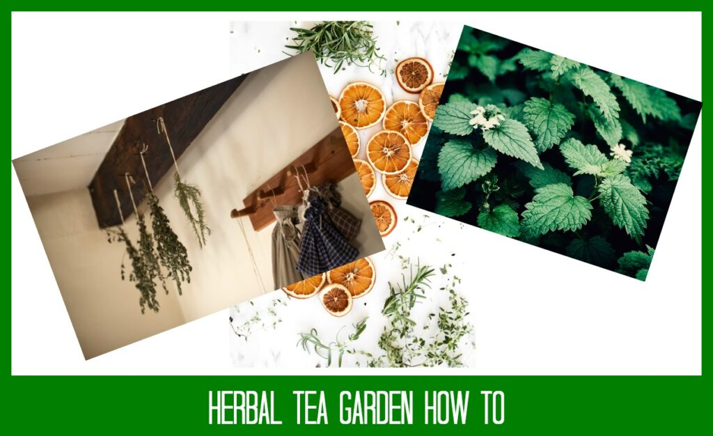 How to Create a Tea Garden from Your Own Herb Garden