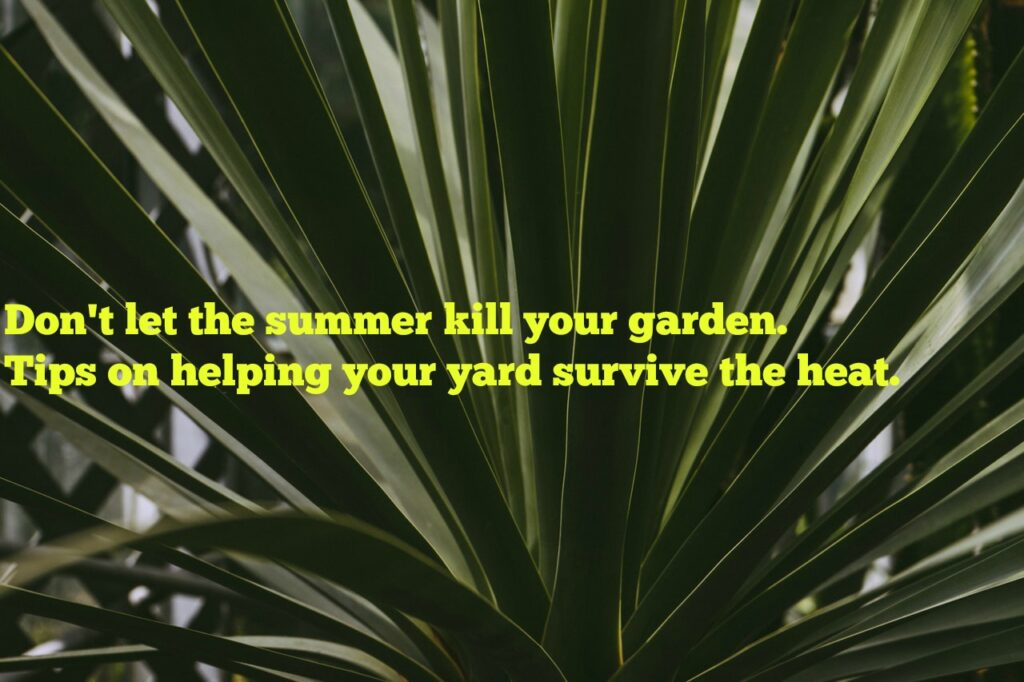 Don't Let the Summer Kill Your Garden