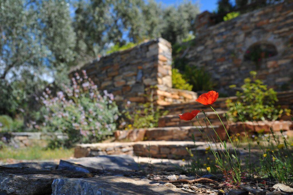 Common Mistakes that Beginner Gardeners Make