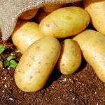 potatoes for beginning gardeners