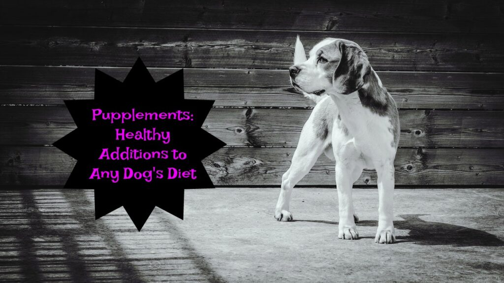 Dog Supplements Can Be Healthy in Your Dog's Diet