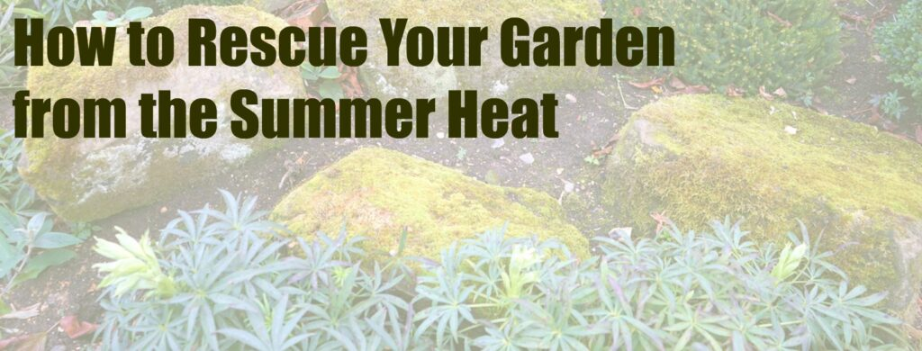 How to Rescue Your Garden from the Summer Heat