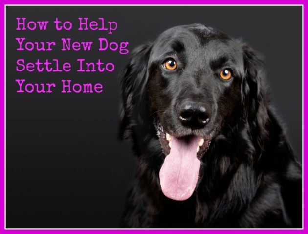 How to Help Your New Dog Settle Into Your Home