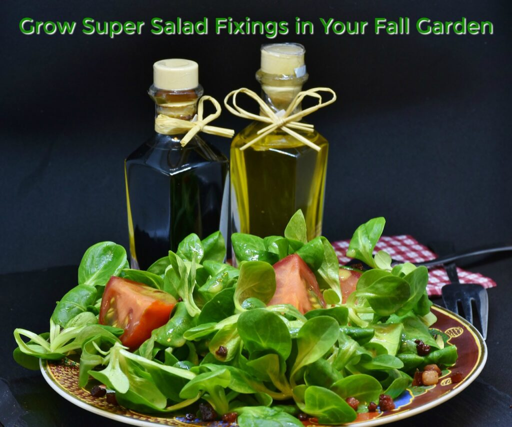 Grow Super Salad Fixings in Your Fall Garden