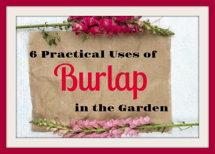 6 Practical Uses of Burlap in the Garden