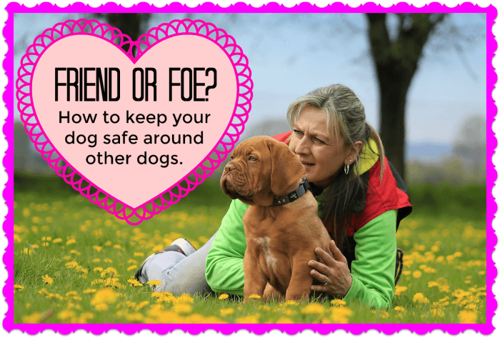 Friend or Foe: How to keep your dog safe around other dogs
