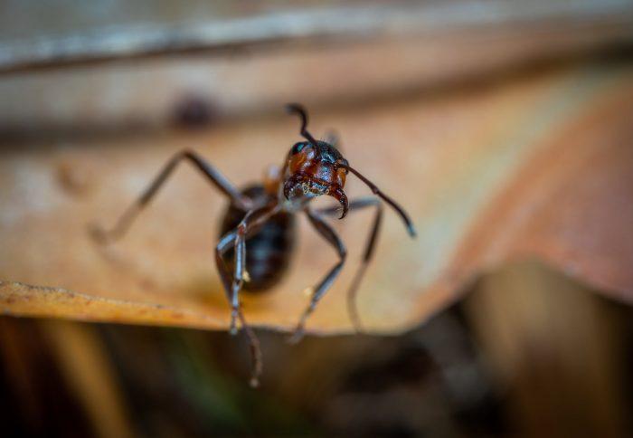 bug free home