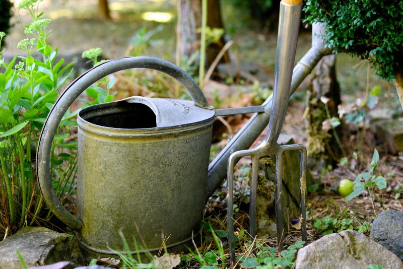 5 Watering Tips All Gardeners Must Know