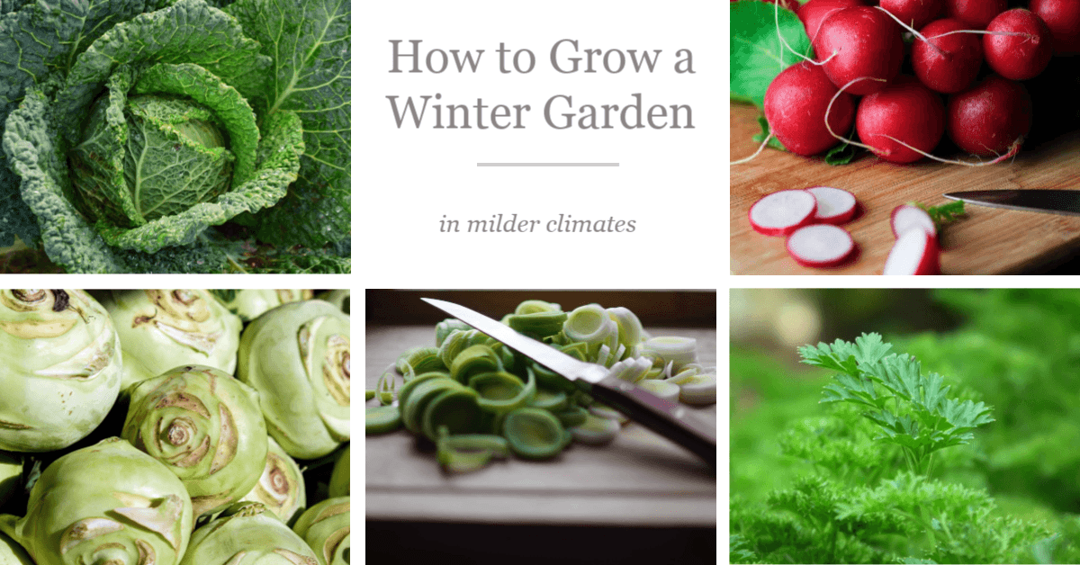 How to Grow a Winter Garden in Milder Climates