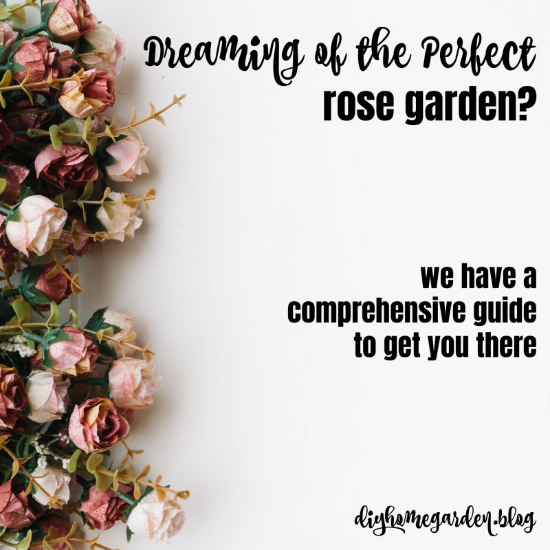 Dreaming of the Perfect Rose Garden?