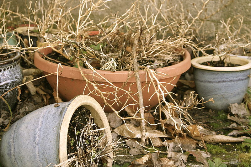 Try This if Your Garden Plants Keep Dying