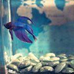 brackish fish tank