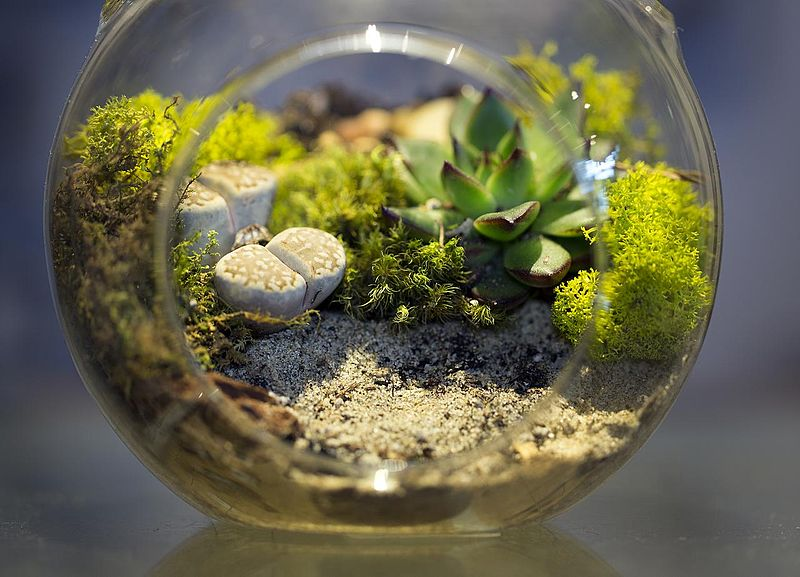 How to Create a Beautiful Glass Terrarium