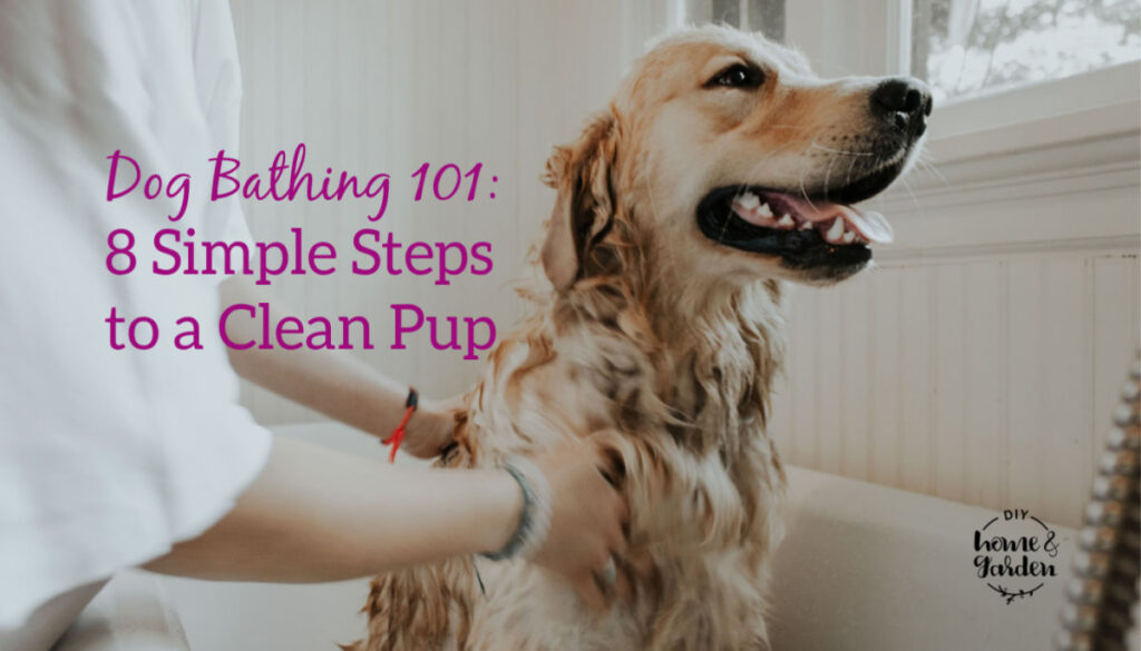 Dog Bathing 101: 8 Steps to a Clean Pup