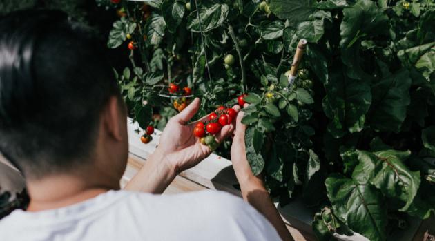 Make a Patio Vegetable Garden this Summer