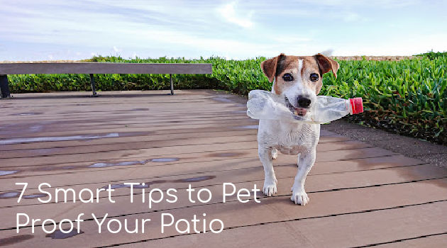 7 Smart Tips to Pet Proof Your Patio