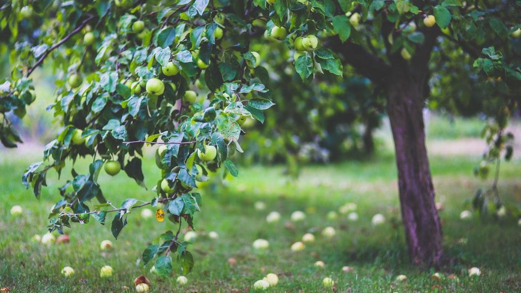 Organic Gardening: Five Easy-To-Make Natural Sprays