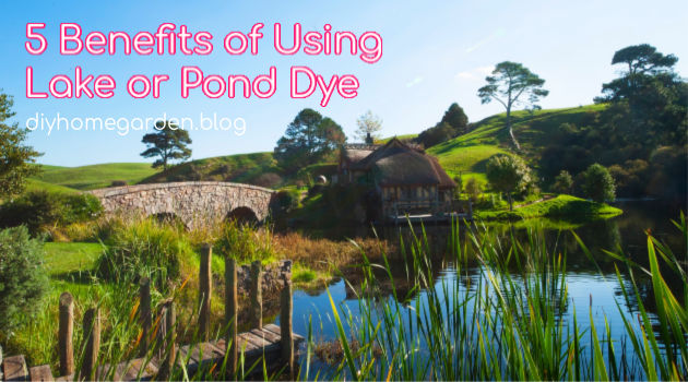 5 Benefits of Using Lake or Pond Dye