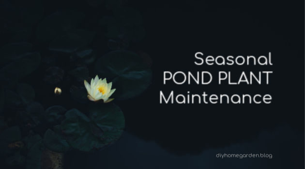pond plant maintenance