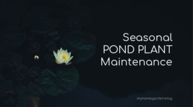 Seasonal Pond Plant Maintenance
