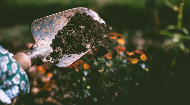 Gardener Explains How to Create Biodiversity