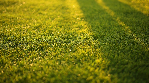 Lawn Care Tips for Healthy Green Grass
