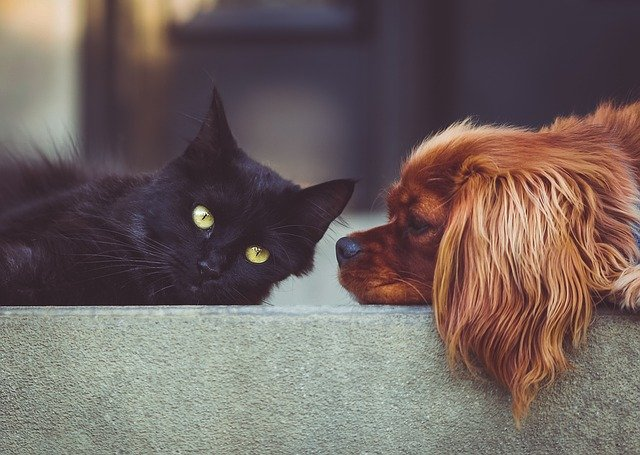 Top Arguments Against Having Pets (that make no sense!)