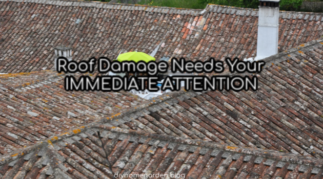 Roof Damage Needs Your Immediate Attention