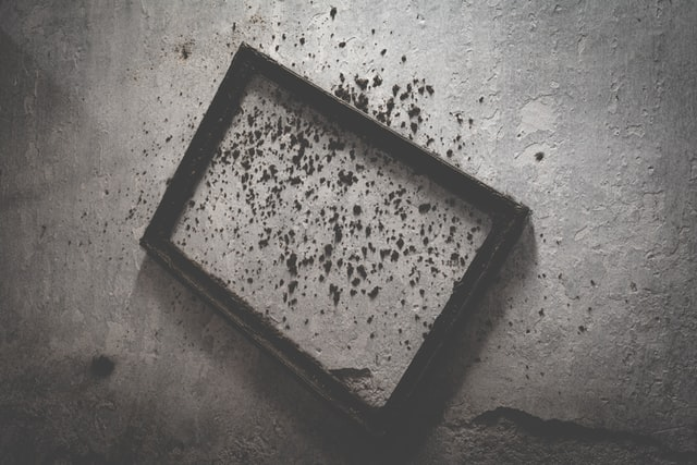 How to Deal with Black Mold in Your Home