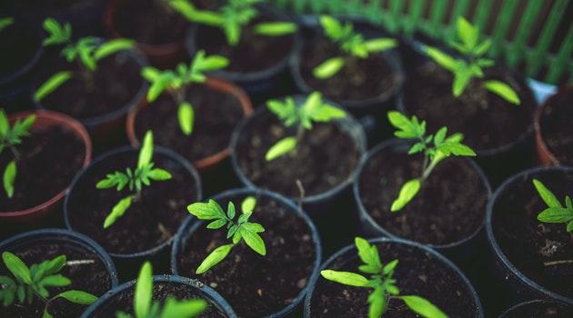 5 Steps to an Organized Garden