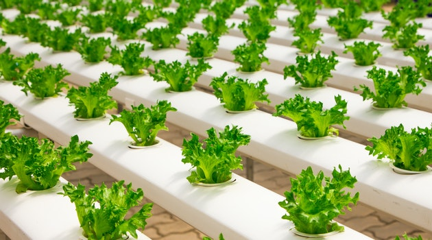 How To Build A Successful Homemade Hydroponic System