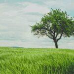 prune trees