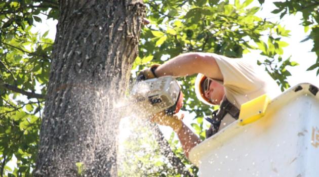 4 Reasons to Hire A Tree Surgeon