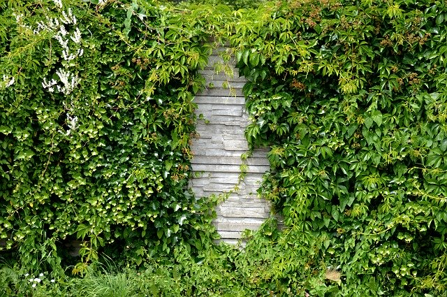 Hedging Yourself In: Creating a More Private Garden