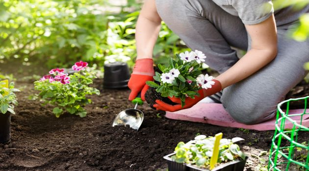 6 Things You Should Know About Garden Plants