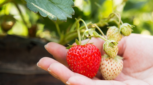 6 Space Saving Crops to Grow in a Small Garden