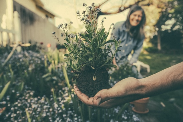 Green Therapy: Gardening for mental health