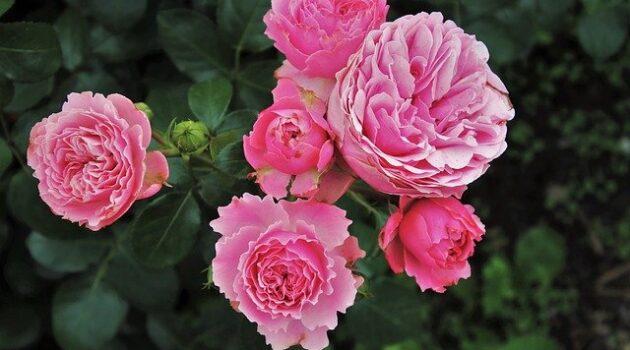 maintaining your garden