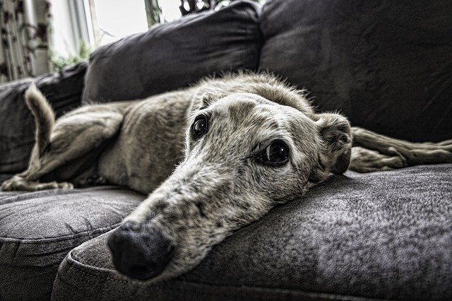 5 Housecleaning Tips for Every Dog Owner