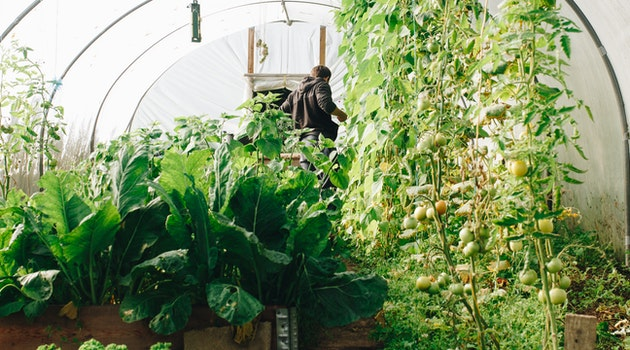 4 Surprising Benefits of Having a Greenhouse